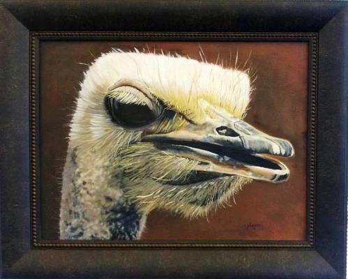 Ostrich_WEB