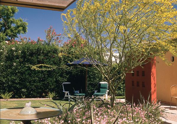 backyard-color